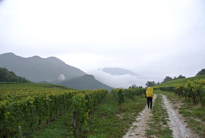 Mitten durch die Weinberge (Yenne)