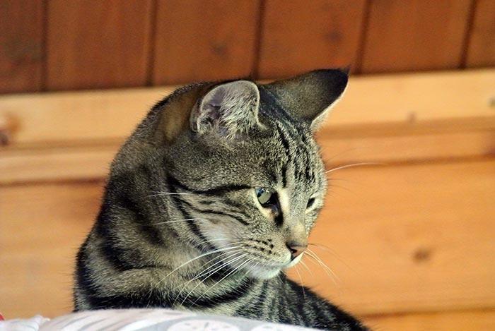 Unser Mitbewohner: Frodo the Cat!