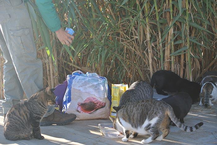 Beim Füttern der Strandkatzen