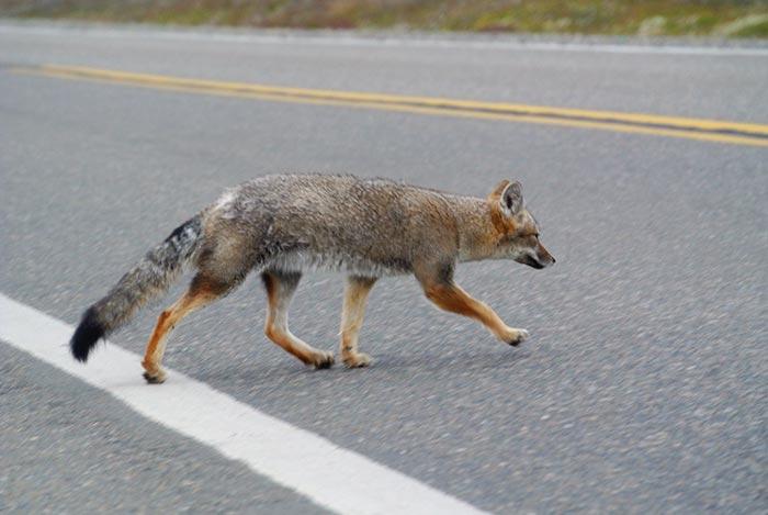 Hier sagen sich wirklich Fuchs und Hase gute Nacht!