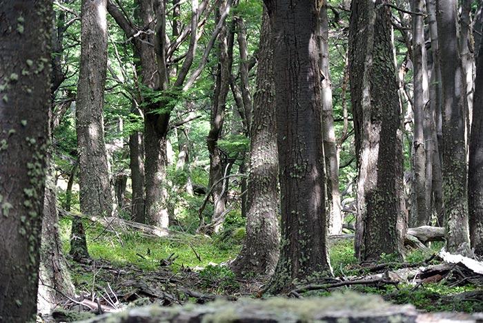 So muss ein Wald aussehen! Nix mit Fichten!