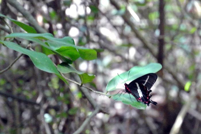 Es wimmelt hier nur so von Schmetterlingen! In allen Farben und Größen!