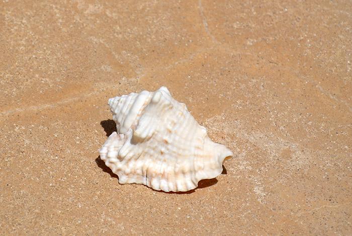 Solche und ähnliche Muscheln spült das Meer jeden Tag einfach an den Strand... ein Traum für Muschelsammler... Leider ist mitnehmen nach Europa nur bedingt erlaubt, weil viele Schnecken geschützt sind!!!