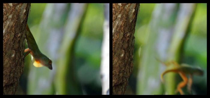Bis zu diesem Bild wussten wir nicht dass ein Gecko fliegen kann ;-)
